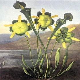 EnglishCommonflowers